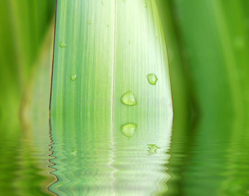 Reflexiones de la planta y del agua ilustración del vector