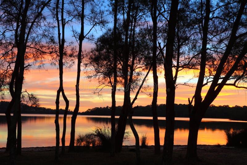 Reflexiones de la salida del sol y siluetas del Casuarina en la laguna fotos de archivo
