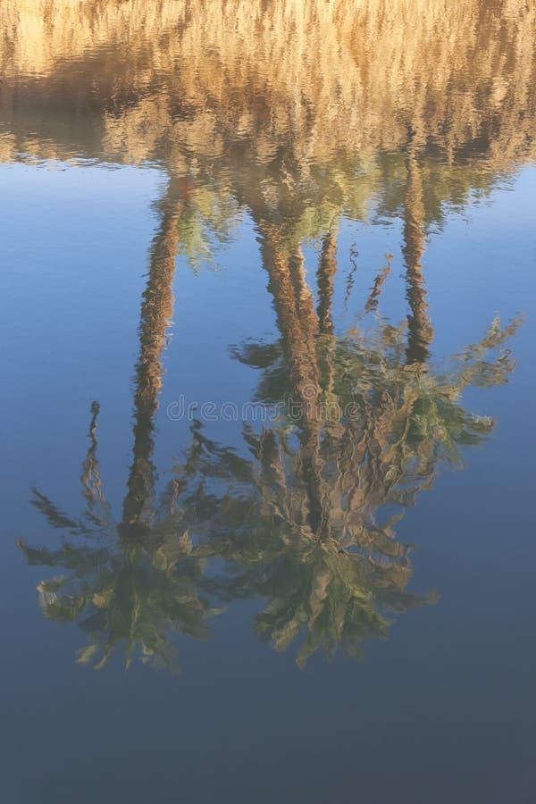 Reflexiones de las palmas datileras en un río. fotos de archivo
