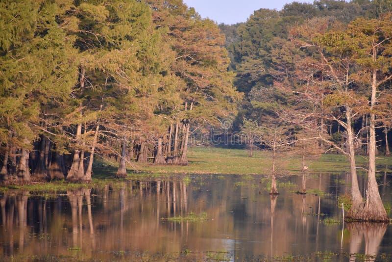 Reflexiones de los árboles de Cypress en el lago negro bayou imagenes de archivo