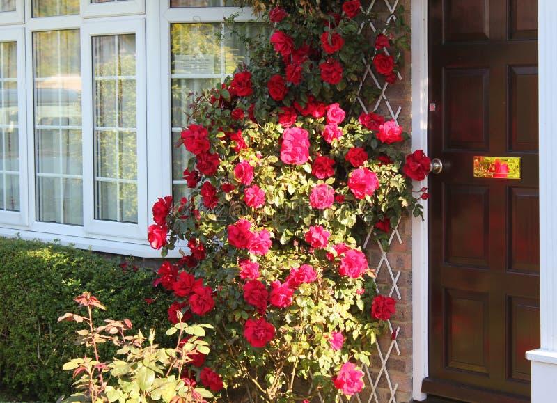 Reflexiones de Rose imagen de archivo libre de regalías