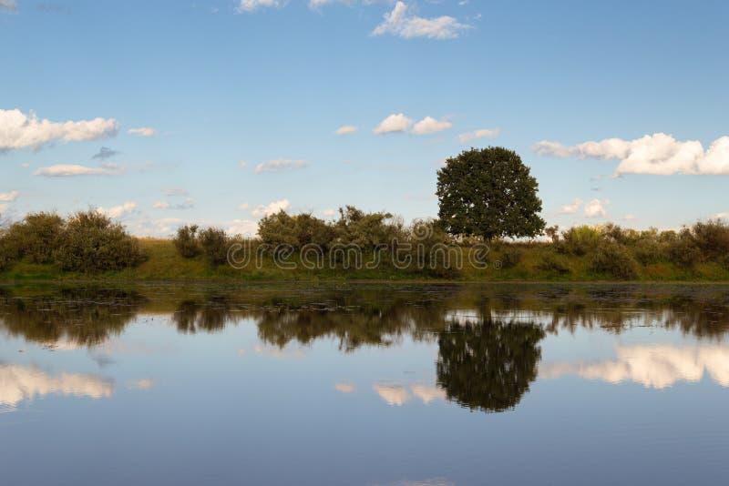Reflexiones de un árbol en el lago fotos de archivo