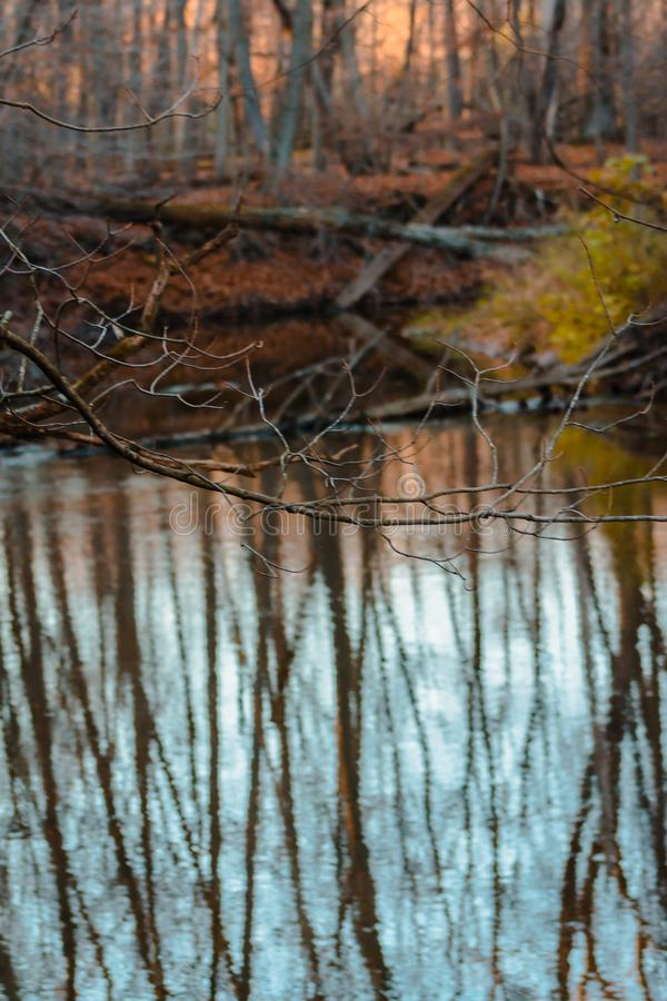 Reflexiones de una corriente en un bosque durante la caída imagenes de archivo