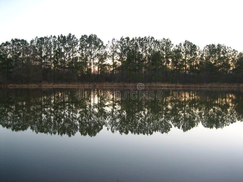 Reflexiones del árbol imagenes de archivo