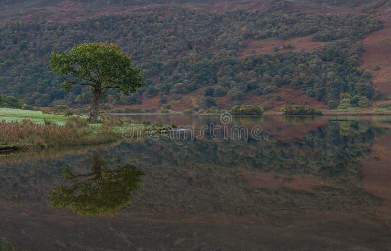 reflexiones del árbol en el lago Crummock, distrito del lago fotos de archivo