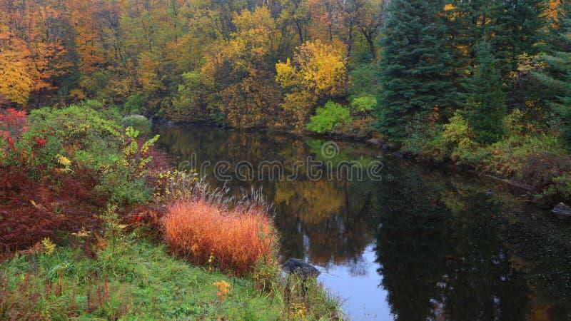 Reflexiones del árbol del otoño en la charca fotos de archivo