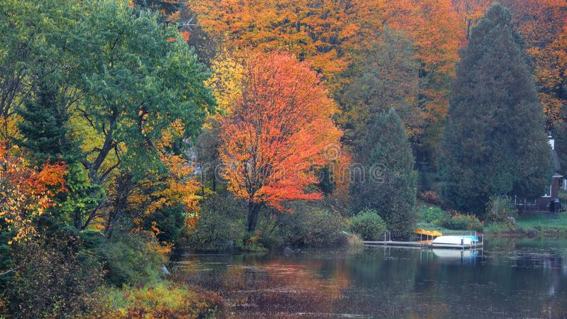 Reflexiones del árbol del otoño en la charca fotografía de archivo