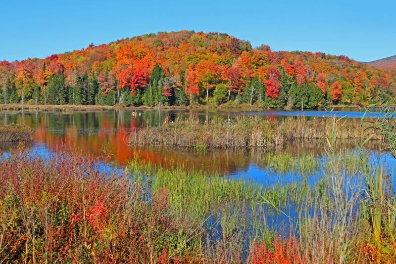 Reflexiones del árbol del otoño en Vermont imagenes de archivo