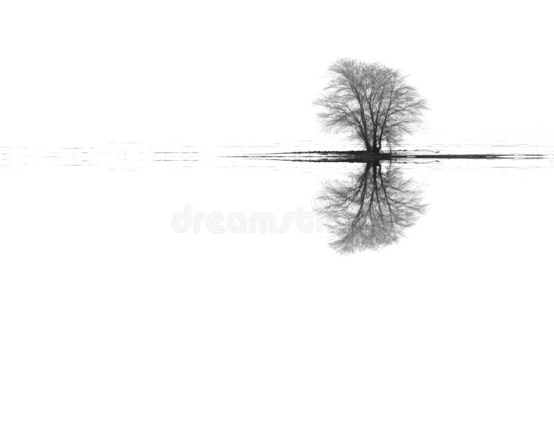 Reflexiones del árbol del paisaje del invierno foto de archivo libre de regalías