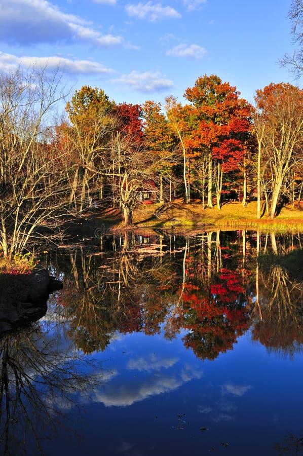 Reflexiones del bosque de la caída imagen de archivo