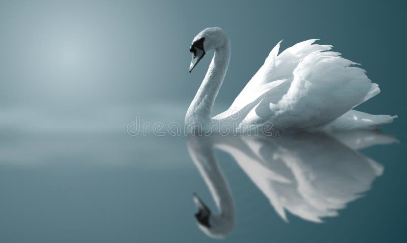 Reflexiones del cisne