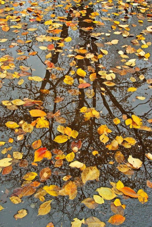 Reflexiones del otoño fotografía de archivo