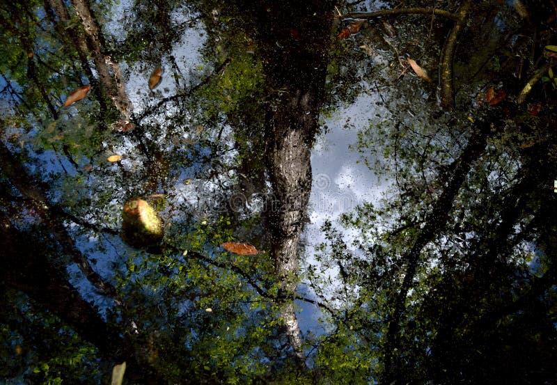 Reflexiones del pantano imagen de archivo