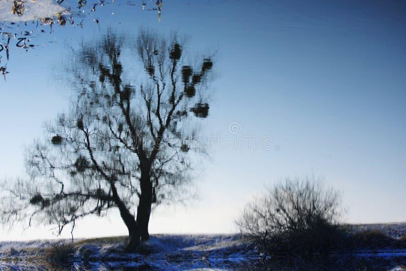 Reflexiones duplicadas del agua fotos de archivo