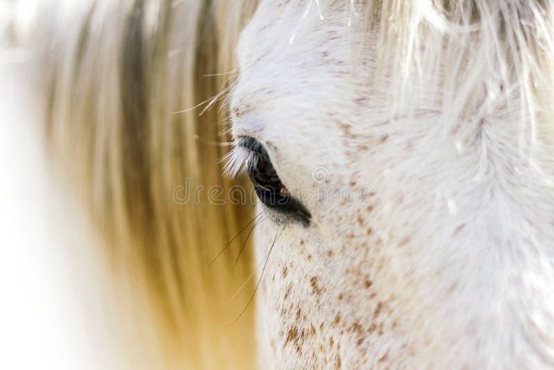 Reflexiones en el ojo de un caballo fotografía de archivo libre de regalías