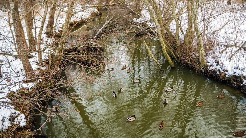 Reflexiones hermosas y patos del agua imagen de archivo libre de regalías