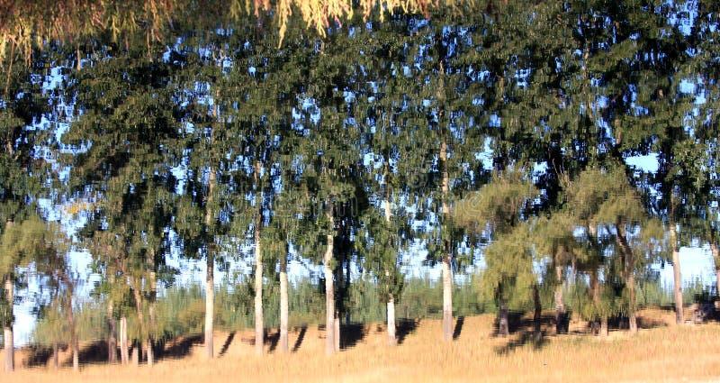 Reflexionsbaum im Wasser stockfoto