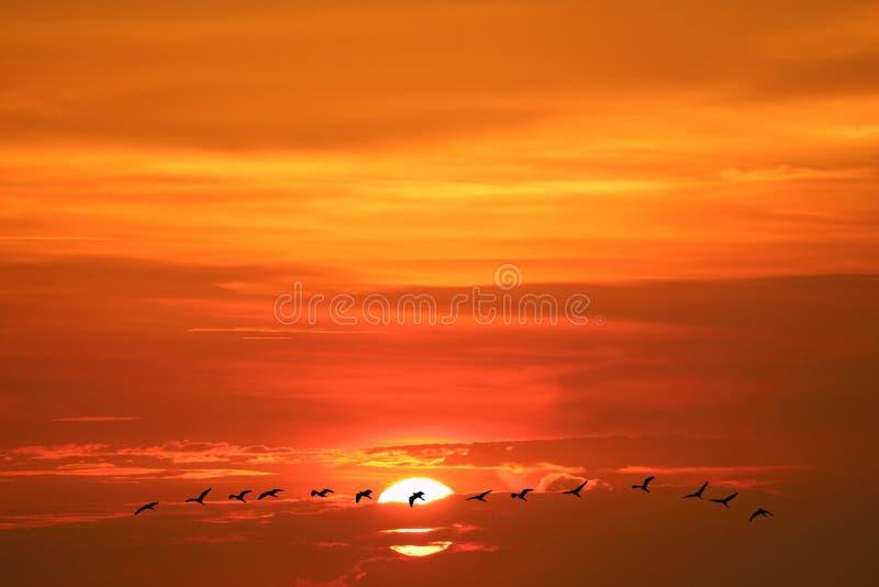 reflexionssolgryning på havskonturgruppen av flugafåglar på himmellinje royaltyfri foto