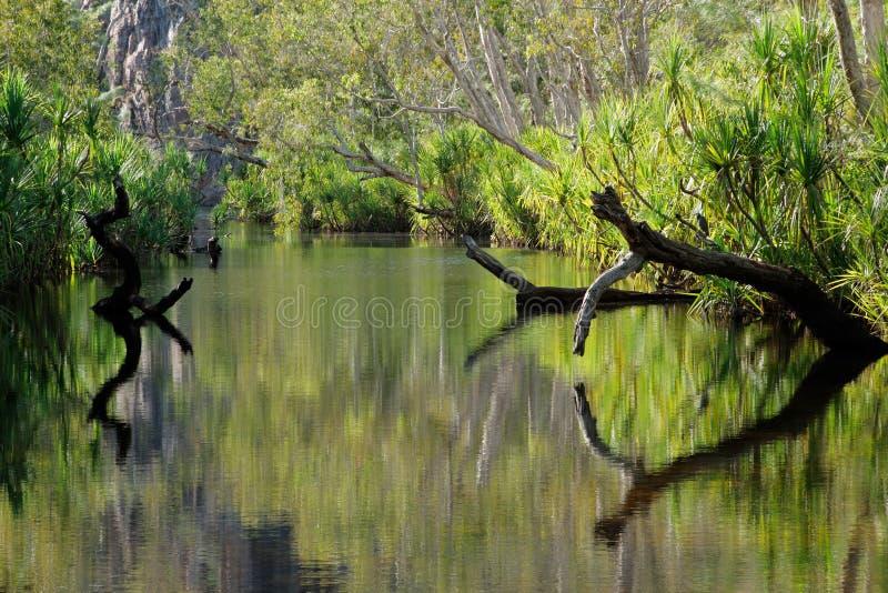reflexionstrees royaltyfri foto