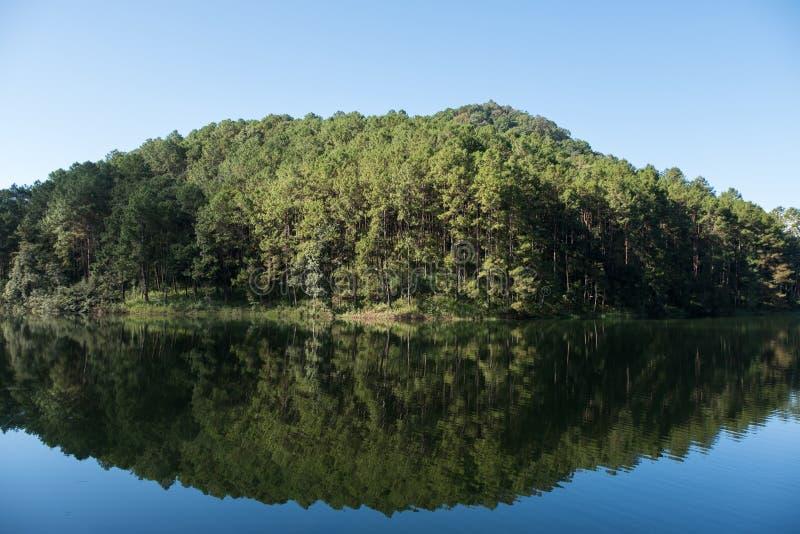 Reflexo da água limpa da floresta de pinheiros imagem de stock