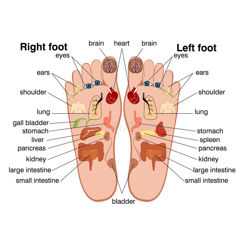 Reflexology zones of the feet vector illustration