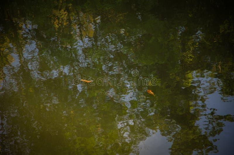 Refliction på vattnet fotografering för bildbyråer