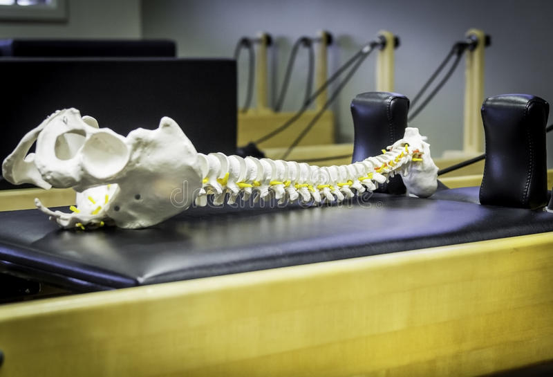 Reformer Pilates and spinal column royalty free stock photography