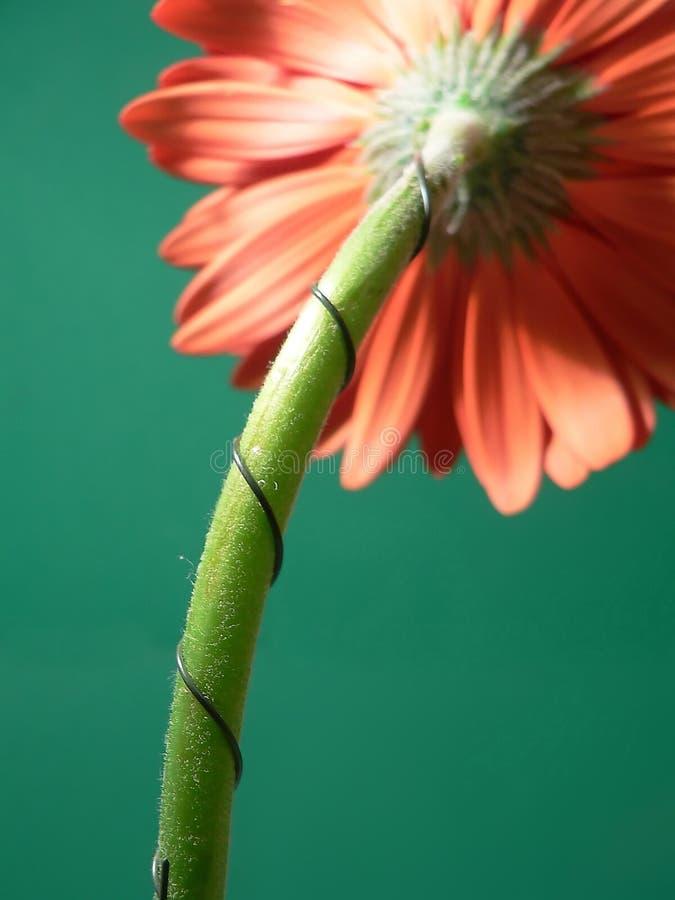 Refoulez le support, détail de fil floral photographie stock
