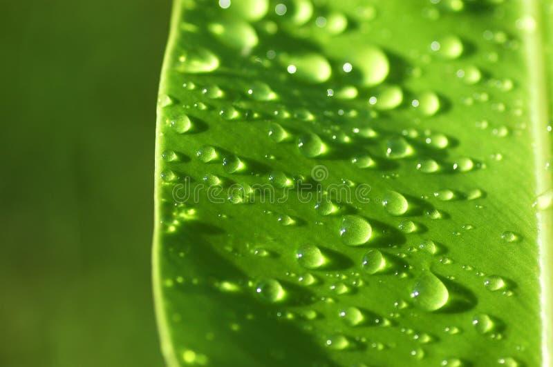 Refreshing stock image