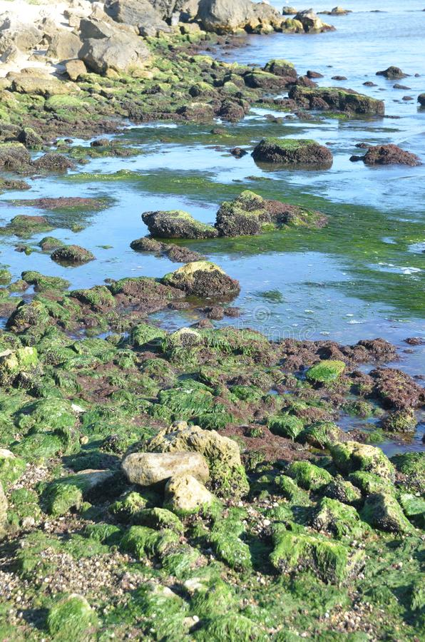 low tide. royalty free stock photo