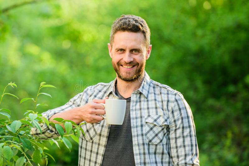 Refreshing drink. Man bearded tea farmer hold mug nature background. Green tea plantation. Whole leaf tea. Excellent royalty free stock images