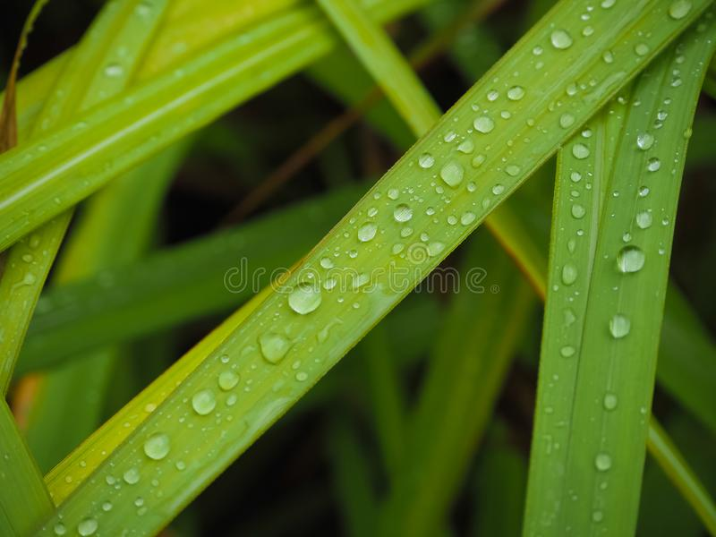 Refreshing in the rainy season. royalty free stock photos