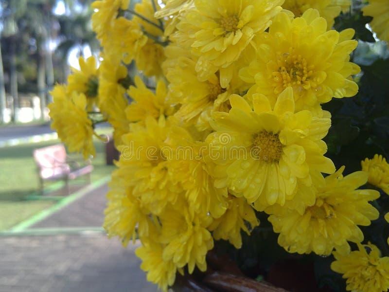 Refresing guling fotografering för bildbyråer