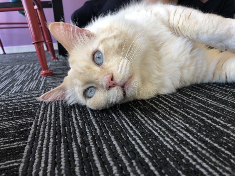Refrigeración del gato fotos de archivo libres de regalías