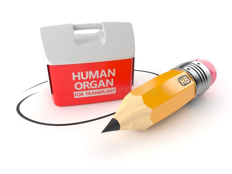 Refrigerador para el órgano humano con el lápiz stock de ilustración