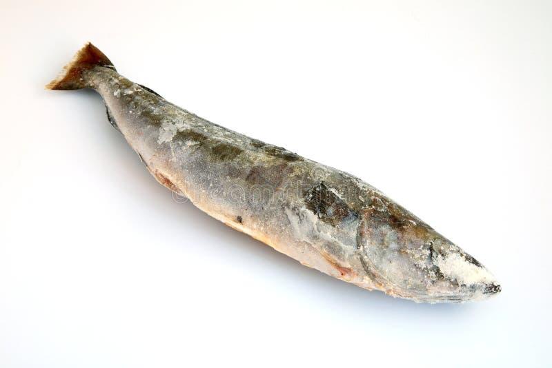 Refrigerated рыбы Стоковые Фотографии RF