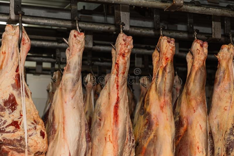 Refrigerated warehouse, hanging hooks of frozen lamb carcasses. Halal cut. stock image