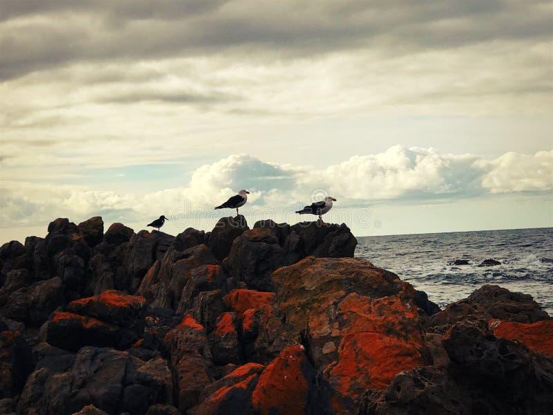 Refroidissement d'oiseaux photos libres de droits