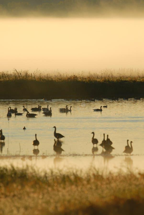 Refuge avien de zone humide image libre de droits