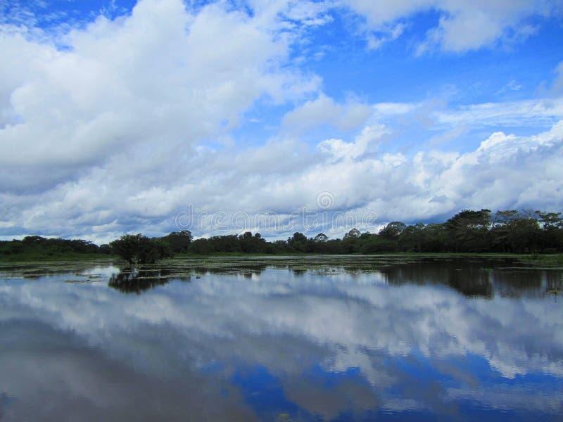 Refuge sauvage Costa Rica de la vie de nègre de Caño images stock