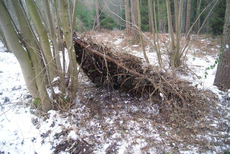 Refugio de la emergencia en el bosque fotografía de archivo