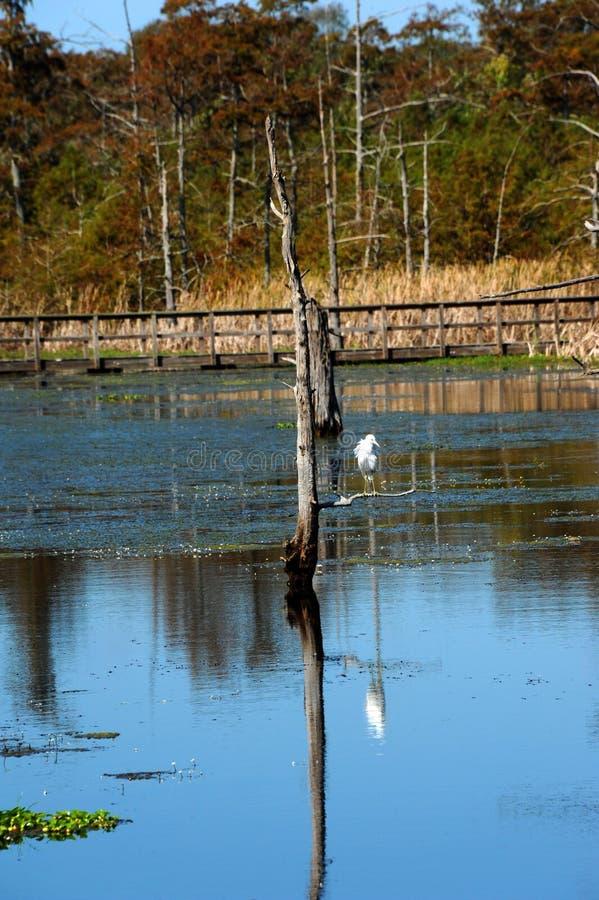 Refugio del hallazgo en el pantano negro fotografía de archivo libre de regalías