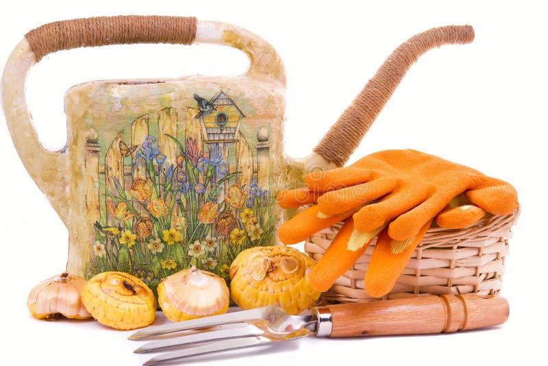 Regadera con los bulbos de un rastrillo y de flor de los tulipanes fotografía de archivo libre de regalías