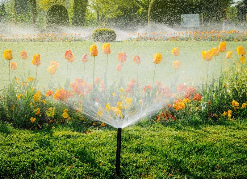 Regadera del agua del sistema de irrigación que trabaja en jardín fotos de archivo