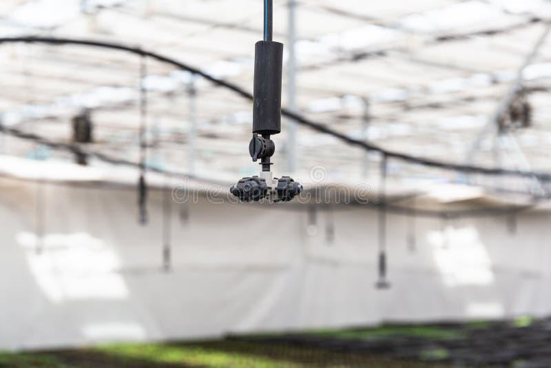 Regadera, sistema de riego automático en invernadero hidropónico foto de archivo