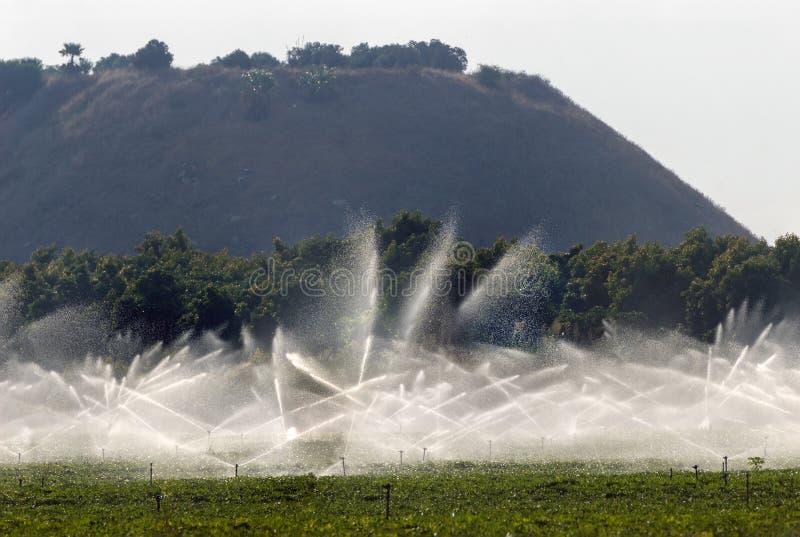 Regaderas de la irrigación en campo del cacahuete fotografía de archivo