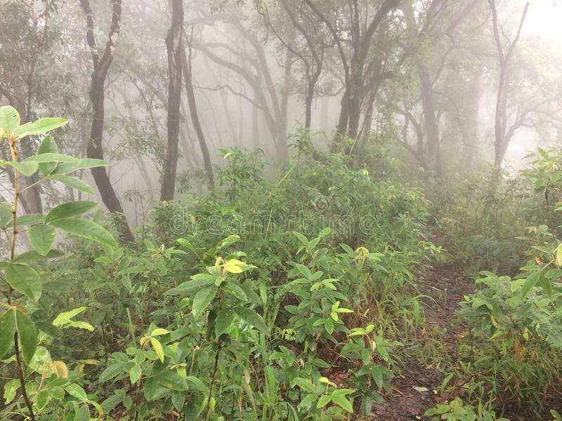 Regain dans la forêt photos libres de droits