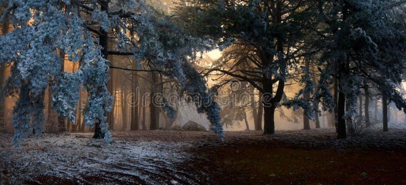 Regain dans la forêt photographie stock
