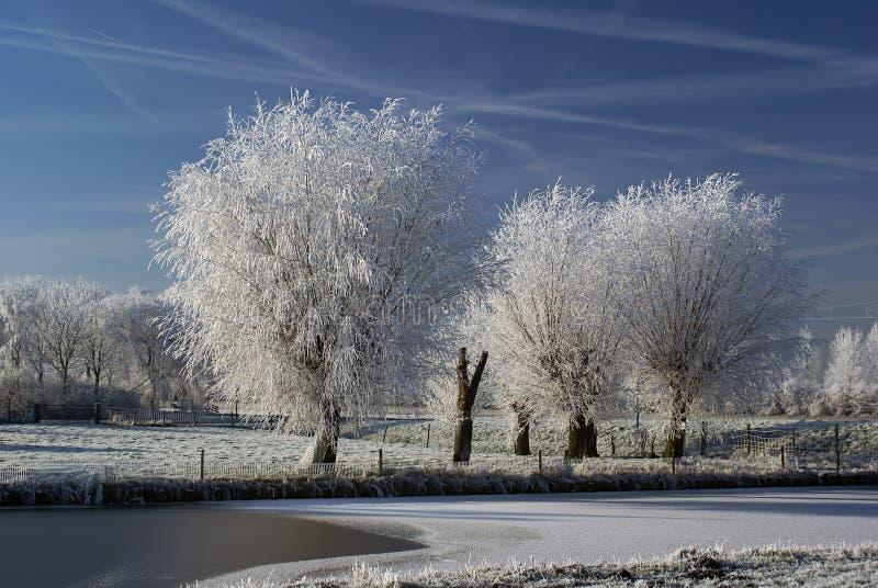 Regain figé sur des arbres photos libres de droits