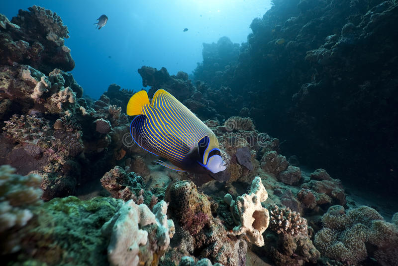 regal havsängelhav arkivbilder